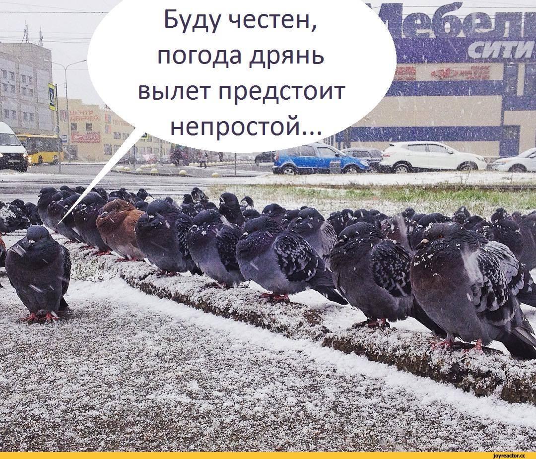 голуби-эскадрилья-Вылет-погода-3473409.jpeg