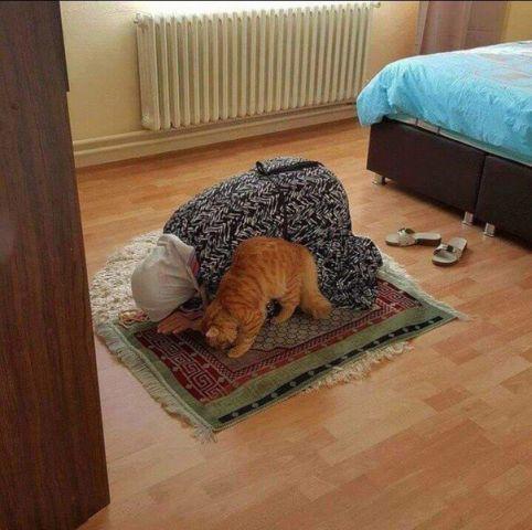 http://files.balancer.ru/cache/forums/attaches/2016/12/640x480/23-4425349-islamizatsiya-kote.jpg